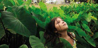 El Tumbador –A Green Prison Where Impunity Reigns